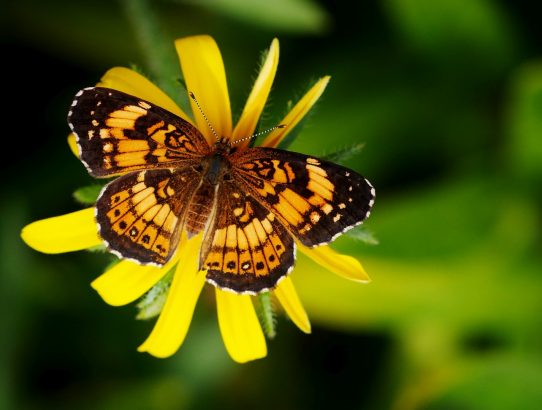 Ivy Creek Butterfly Walk