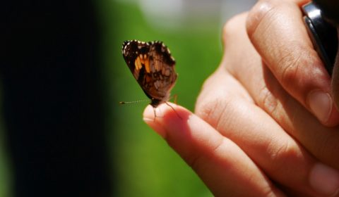Examining Closely - Pearl Crescent